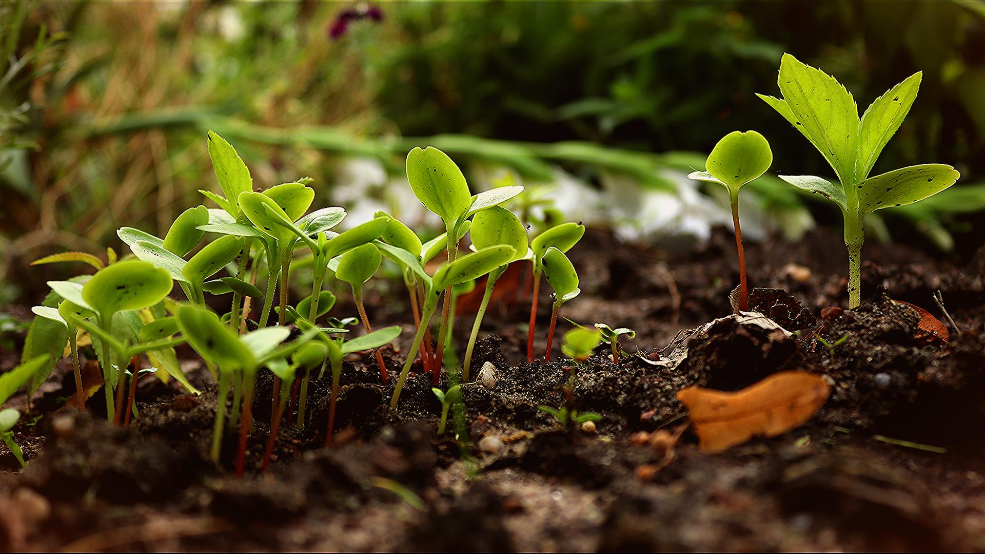 Små plantor i jord